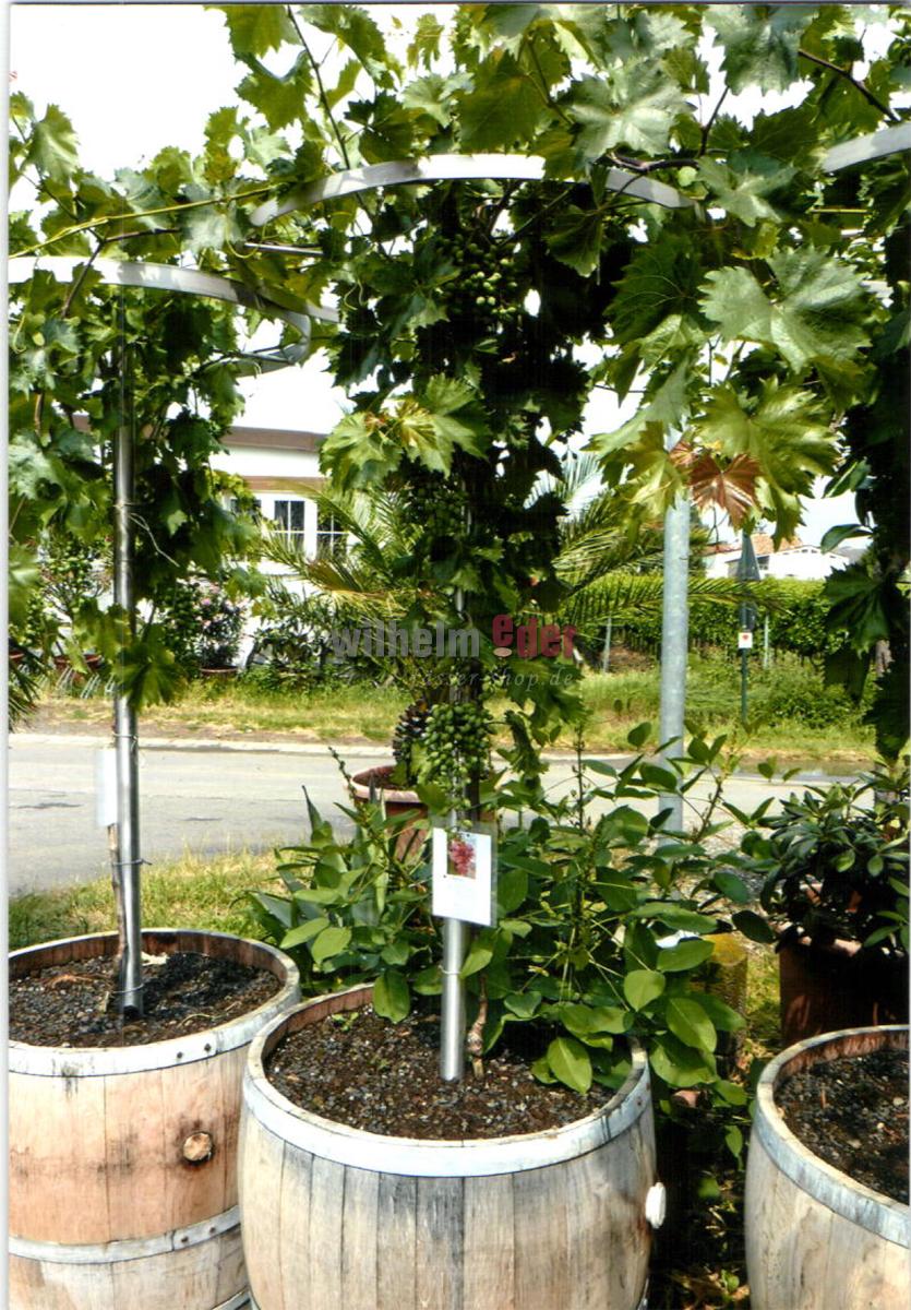 Fassstolz plantes d co meubles de tonneaux jardin for Deco jardin plantes